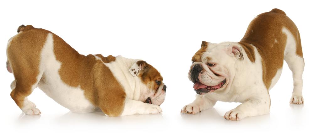 twodogs.jpg